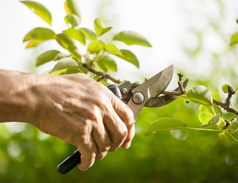 hortek urejanje okolja svetovanje namakalni sistemi - storitev obrezovanje sadnih in okrasnih rastlin