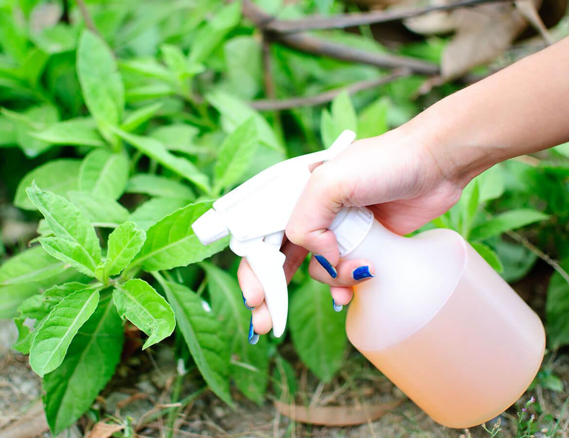 hortek urejanje okolja svetovanje namakalni sistemi - storitev prehrana in varstvo rastlin
